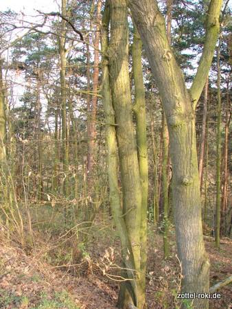 Verliebte Bäume