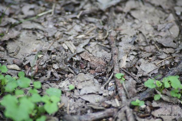 Ein Frosch, aber kein Reh