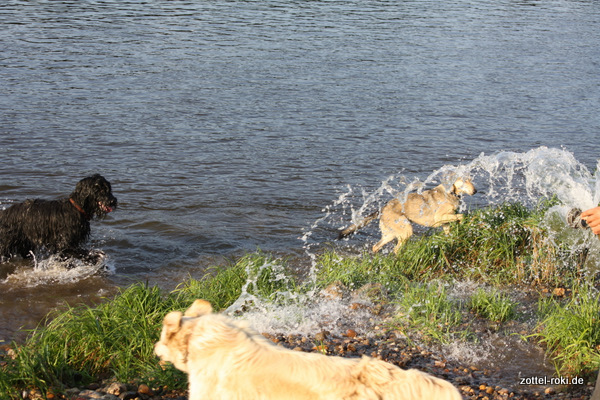 Wasserfall für Hunde