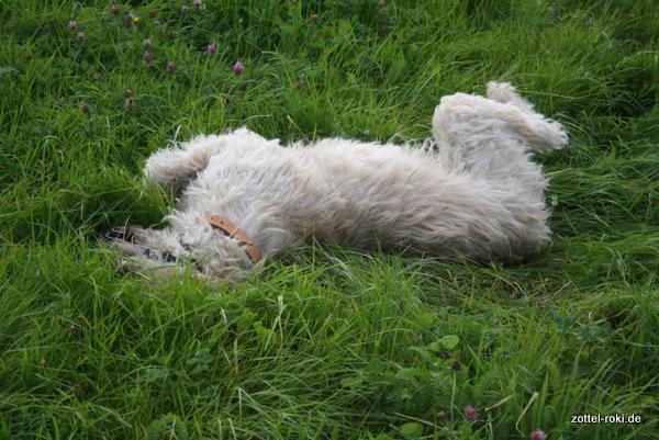 wälzen im Gras