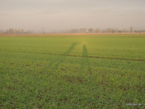 50m Schatten - Guten Morgen Sonne !