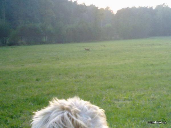 Roki und der Fuchs