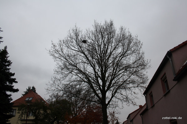 Nest der Tauben