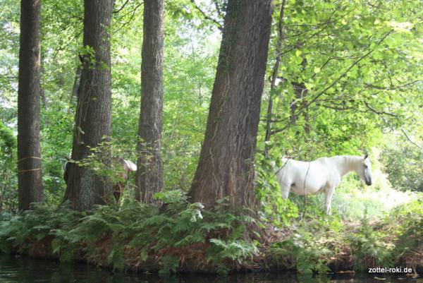 Pferde allein im Wald